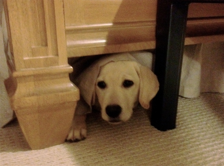 More time playing hide 'n seek with the pup. I'm not sure who loves this game more, JoJo or me.