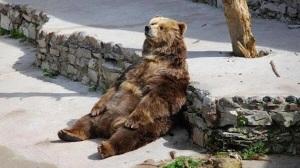 bear-duf1