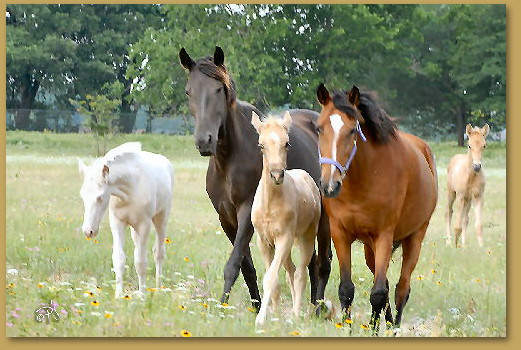 walking-horses-for-sale-in-Texas